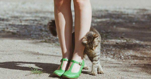 Εσείς γνωρίζετε ΓΙΑΤΙ αρέσει στις γάτες να τρίβονται πάνω σας; Δεν φαντάζεστε τον λόγο!