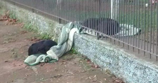 Αυτός ο σκύλος έβγαλε την κουβέρτα από το σπιτάκι του και την έσυρε στα κάγκελα για να ζεστάνει τον φίλο του που κρύωνε!