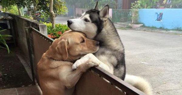 40 ζευγάρια ζώων που αποδεικνύουν ότι υπάρχει αγάπη στο ζωικό βασίλειο