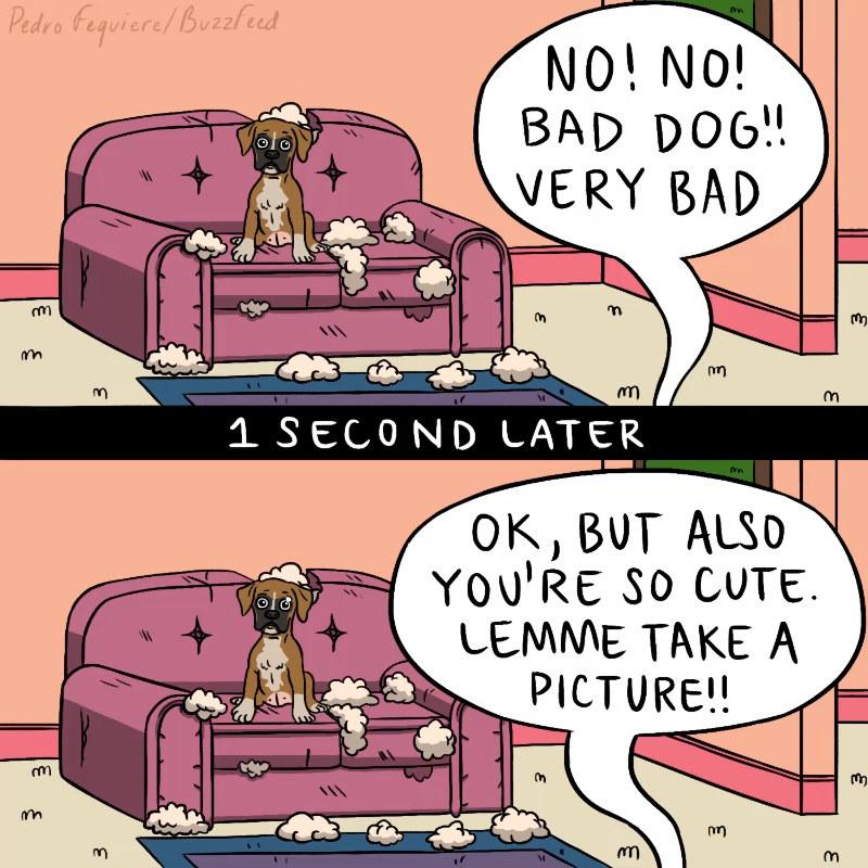 Σκύλος σκυλιά