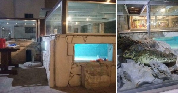 Ταβέρνα στο Ηράκλειο Κρήτης έχει ως έκθεμα φυλακισμένο κροκόδειλο εδώ και 15 χρόνια