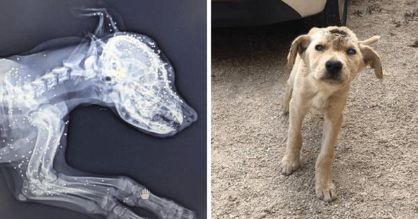 Αδέσποτος σκύλος στον Λίβανο πυροβολήθηκε στο κεφάλι πολλές φορές αλλά δεν το έβαλε κάτω