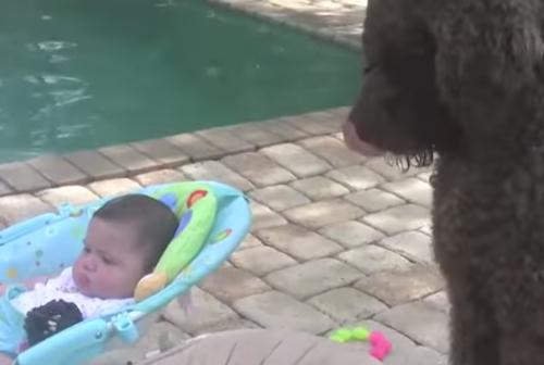 Σκύλος κοριτσάκια