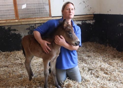 πόνι ορφανό πόνυ άλογα