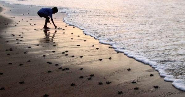 Γεννητούρια στη Ζάκυνθο – Εκκολάφτηκαν τα πρώτα χελωνάκια Καρέτα Καρέτα