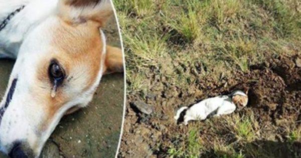 Συγκλονιστικό! Γενναίος σκύλος θυσίασε την ζωή του για να σώσει την οικογένειά του από συμμορία ληστών