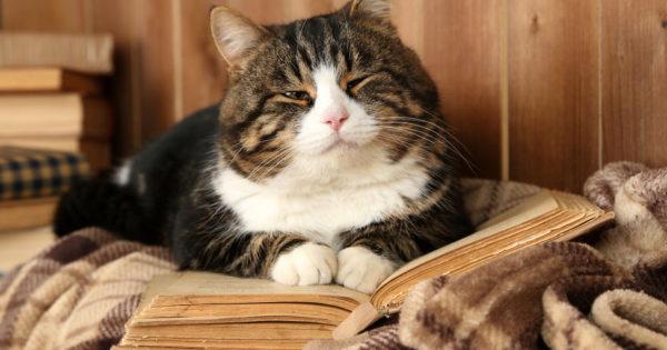 Γιατί η γάτα σας κάθεται πάνω από το βιβλίο ή laptop σας ενώ τα χρησιμοποιείτε ;