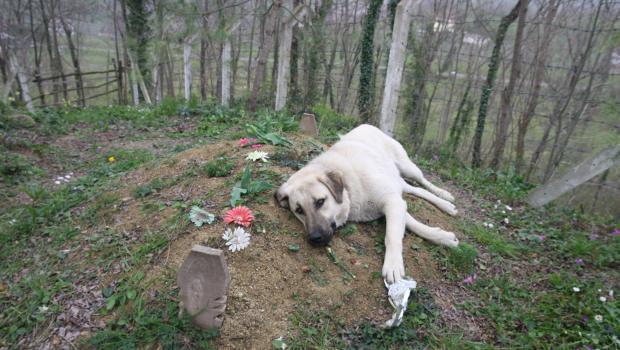 Σκύλος ιδιοκτήτης