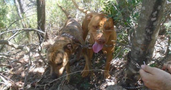 ΦΡΙΚΗ: Έδεσε και εγκατέλειψε 2 σκυλιά σε ορεινή περιοχή της Σαλαμίνας για να πεθάνουν από δίψα & πείνα
