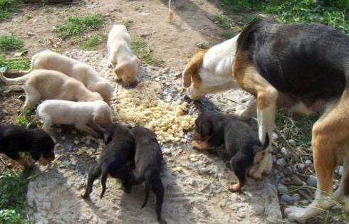 Τέλος η ζωοφιλία στην Ελλάδα – Θα απαγορεύεται η περισυλλογή και η φροντίδα αδέσποτων ζώων