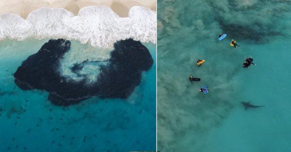 400 καρχαρίες περικυκλώνουν παιδιά που έκαναν σερφ στην Αυστραλία