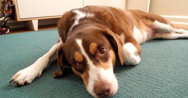 Πόσο κακό κάνει το στρες στην υγεία του σκύλου μας