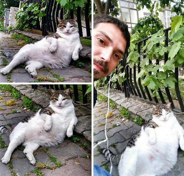 γάτος γάτες Γάτα αδέσποτος γάτος αδέσποτη Αδέσποτα