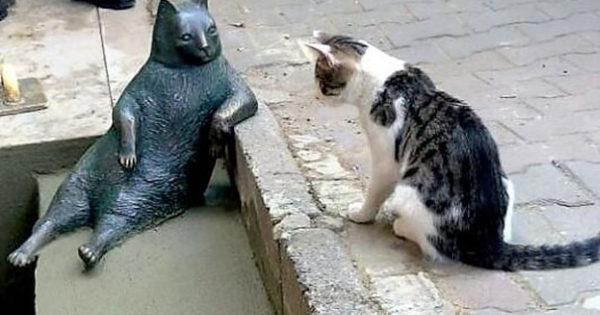Ο πιο διάσημος γάτος της Κωνσταντινούπολης έχει πλέον το δικό του άγαλμα