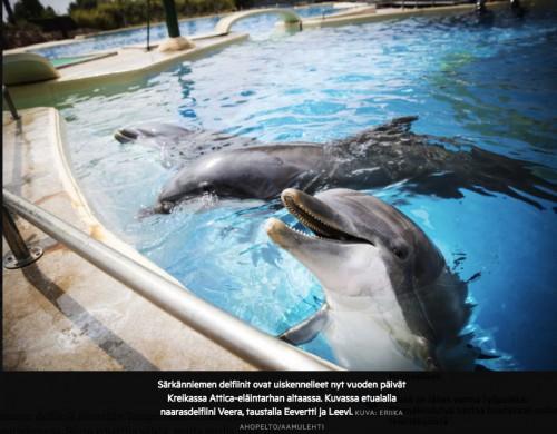 καταγγελία θηλυκό δελφίνι βασανιστική μεταφορά