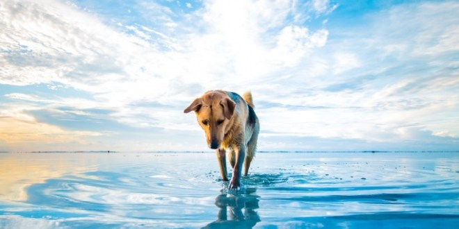 193999-dog-beach-clouds-sea-animals-mascot-water-blue-white-nature