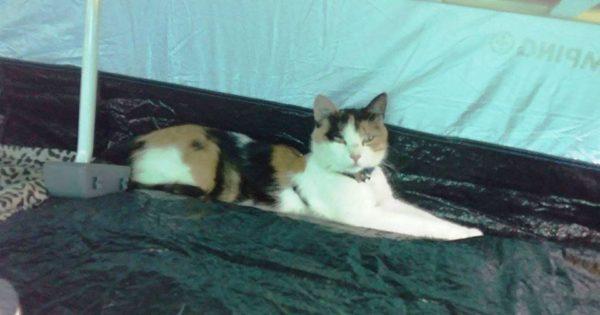 SOS Χάθηκε γάτα στον ΟΣΕ Λαρισας !