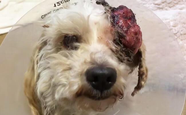 κτηνίατρος ευθανασία