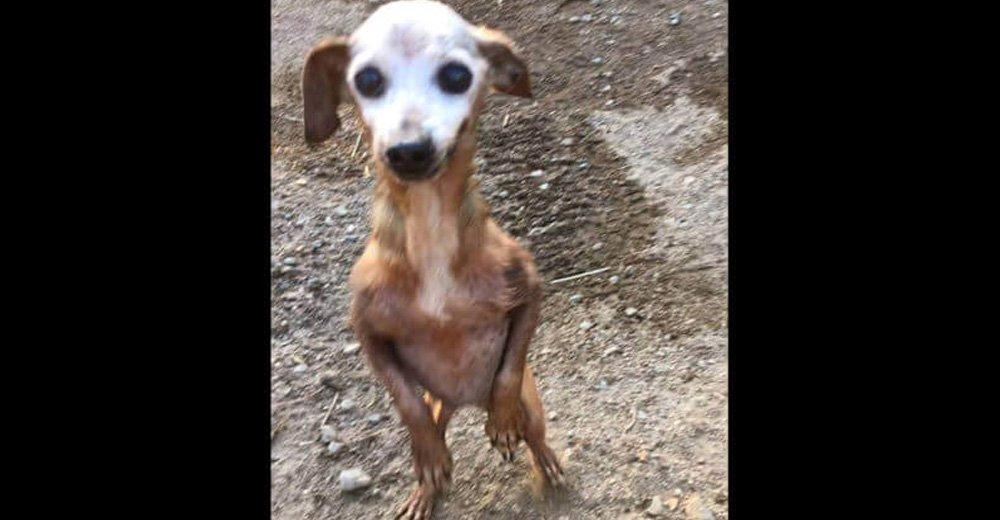 Σκύλος εγκατέλειψαν σκύλο