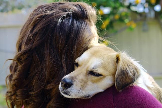 Σκύλος σκύλοι πιστός φίλος