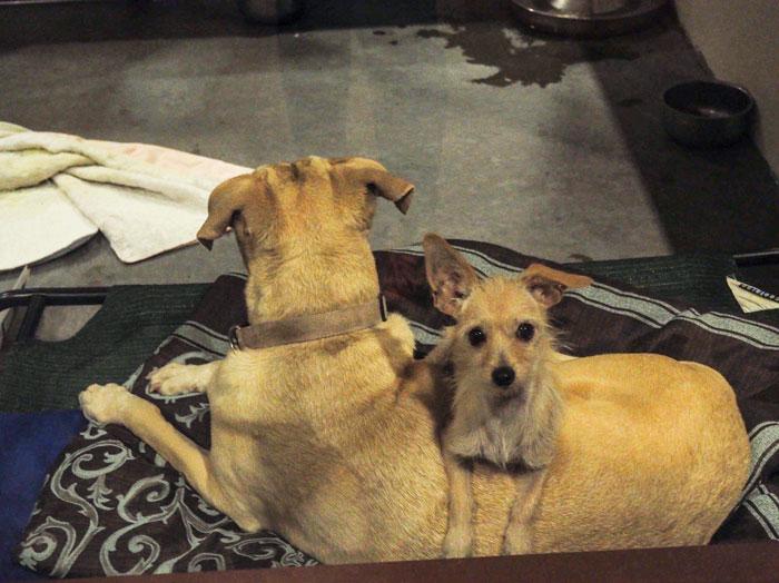 Σκύλος σκύλοι Αδέσποτος σκύλος αδέσποτος αδέσποτη Αδέσποτα
