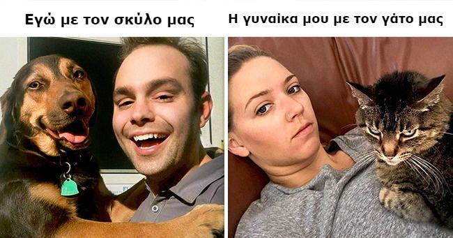 σκύλοι διαφορές γάτες