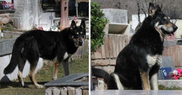 Σκύλος κάθεται πάνω από τον τάφο του ιδιοκτήτη του εδώ και 10 χρόνια