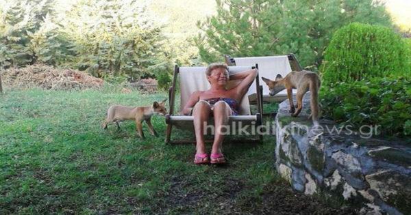 Χαλκιδική: Τα αλεπουδάκια ξεθάρεψαν – Οι φωτογραφίες που σαρώνουν τα social media [pics]