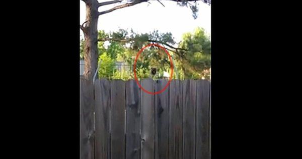 Άκουγε παράξενους ήχους από το σπίτι του γείτονα. Όταν κοίταξε πίσω από τον φράχτη; Έμεινε άναυδος με ΑΥΤΟ που αντίκρισε!