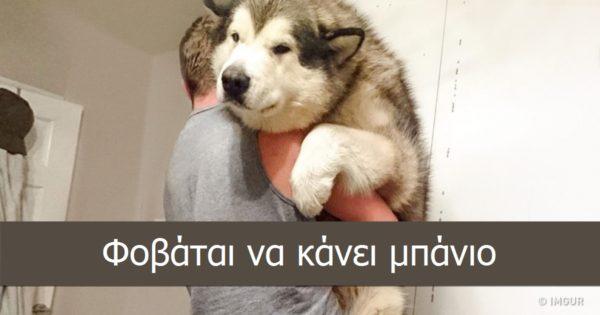 20 υπέροχες φωτογραφίες που αποδεικνύουν ότι τα σκυλιά κατά βάθος μένουν πάντα κουτάβια!