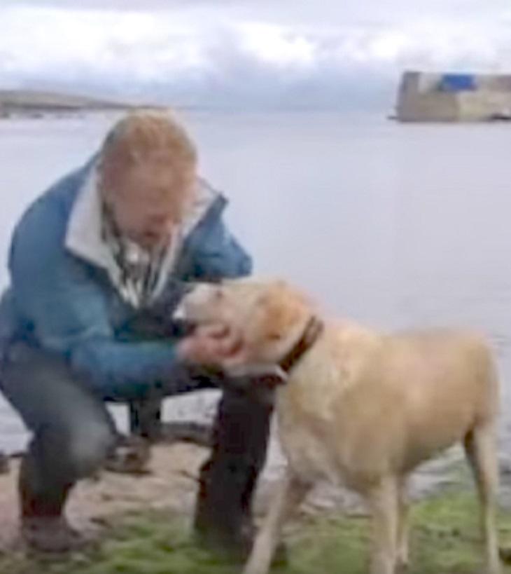 Σκύλος θάλλασσα