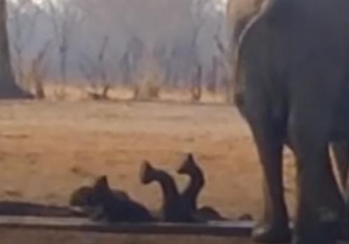Μωρό ελεφαντάκι