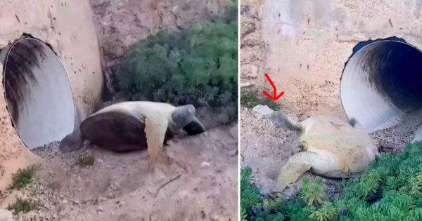 Άντρας βλέπει μια νεκρή χελώνα κάτω από μια γέφυρα. Μόλις πλησιάζει λίγο πιο κοντά όμως, παθαίνει ΣΟΚ..!