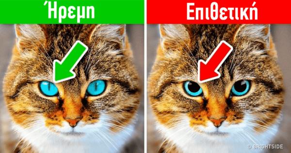 12 σημάδια ότι πρέπει επειγόντως να πάτε τον σκύλο ή την γάτα σας στον κτηνίατρο