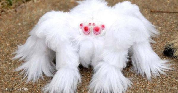 13 πολύ περίεργα πλάσματα που ελάχιστοι γνωρίζουν την ύπαρξη τους
