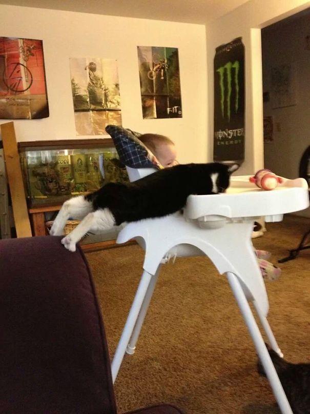 κατοικίδια αστείες στιγμές κατοικίδιων ζώων