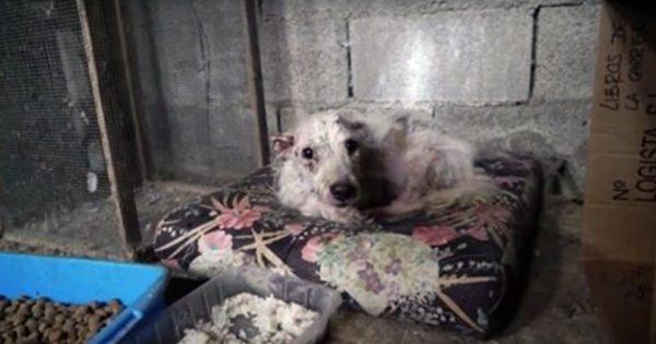 Οι διασώστες πάγωσαν όταν είδαν σε ΤΙ συνθήκες ζούσε το άρρωστο σκυλί για χρόνια. Όταν όμως το εξέτασε ο κτηνίατρος…