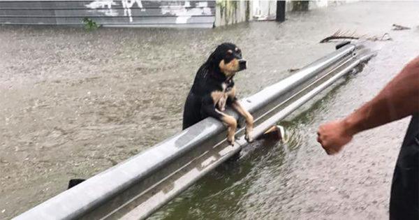 Άφησαν δεμένα τα σκυλιά τους να πεθάνουν στις πλημμύρες που προκάλεσε ο τυφώνας στις ΗΠΑ