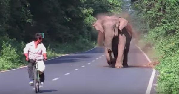 Μόλις ο ελέφαντας βλέπει τον ποδηλάτη, τον παίρνει με μανία στο κυνήγι. Ο λόγος; Προσέξτε την προβοσκίδα του!