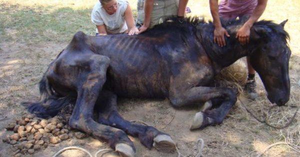 ΝΤΡΟΠΗ ΤΟΥ: Συνελήφθη ο ιδιοκτήτης ζωολογικού πάρκου στο Λιμνοχώρι Αχαΐας