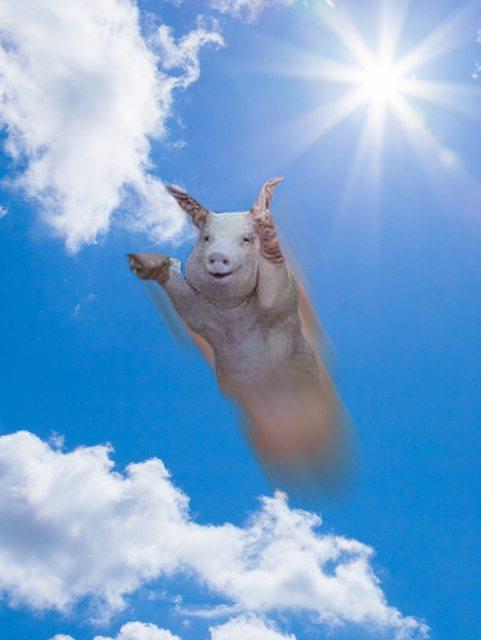 χαρούμενο γουρουνάκι γουρούνι γουρουνάκι