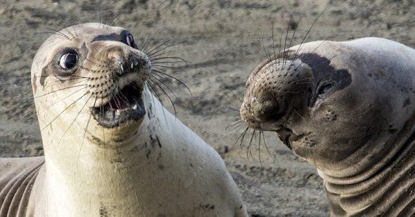 Χιουμοριστικά στιγμιότυπα από την άγρια ζωή!