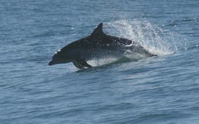 δελφίνι Βίντεο Αγρίνιο