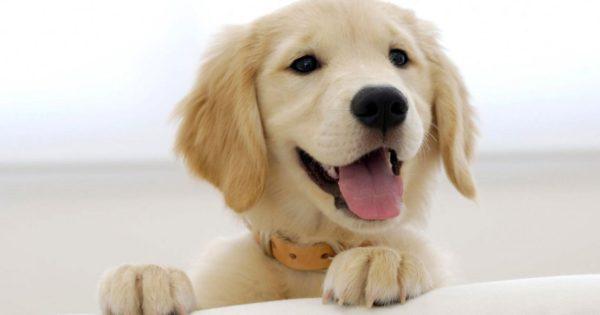 Βίντεο: Σκύλος κλέβει μια μπαγκέτα αλλά στο τέλος…την «πατάει»