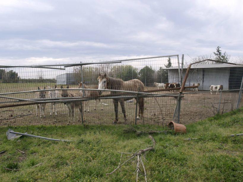 συνελήφθη ιδιοκτήτης ζωολογικού πάρκου συνελήφθη