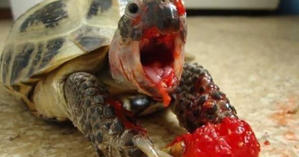 Ζωάκια που τρώνε μούρα και φαίνονται σαν χαρακτήρες από ταινίες τρόμου!