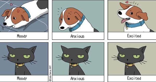 Οι ξεκαρδιστικές διαφορές σκύλου και γάτας