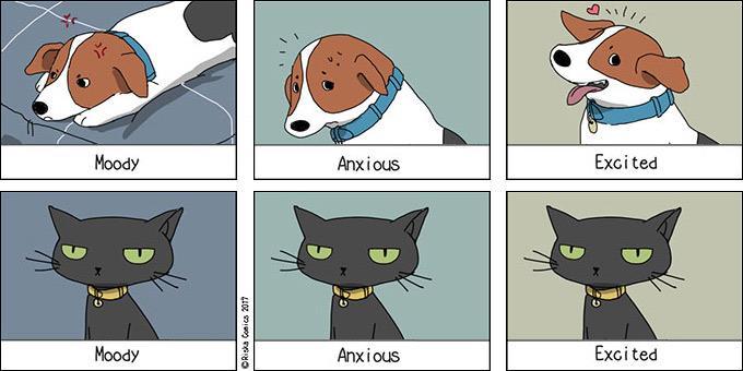 1114110-cat-dog-680