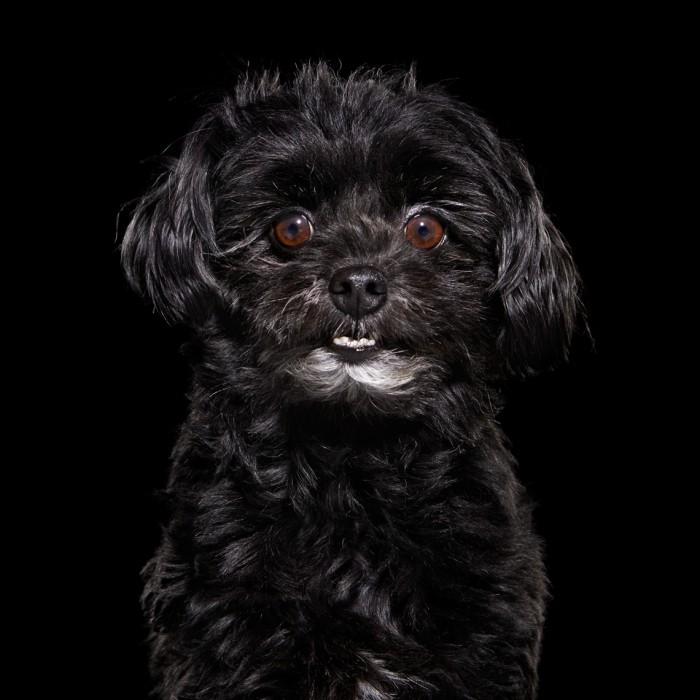 σκύλοι μαύροι σκύλοι μαύρα σκυλιά