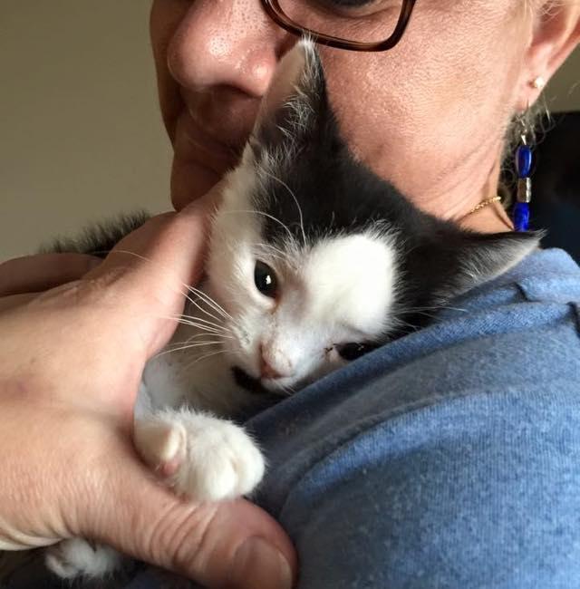 γατούλα γάτα φωτογραφίες Γάτα